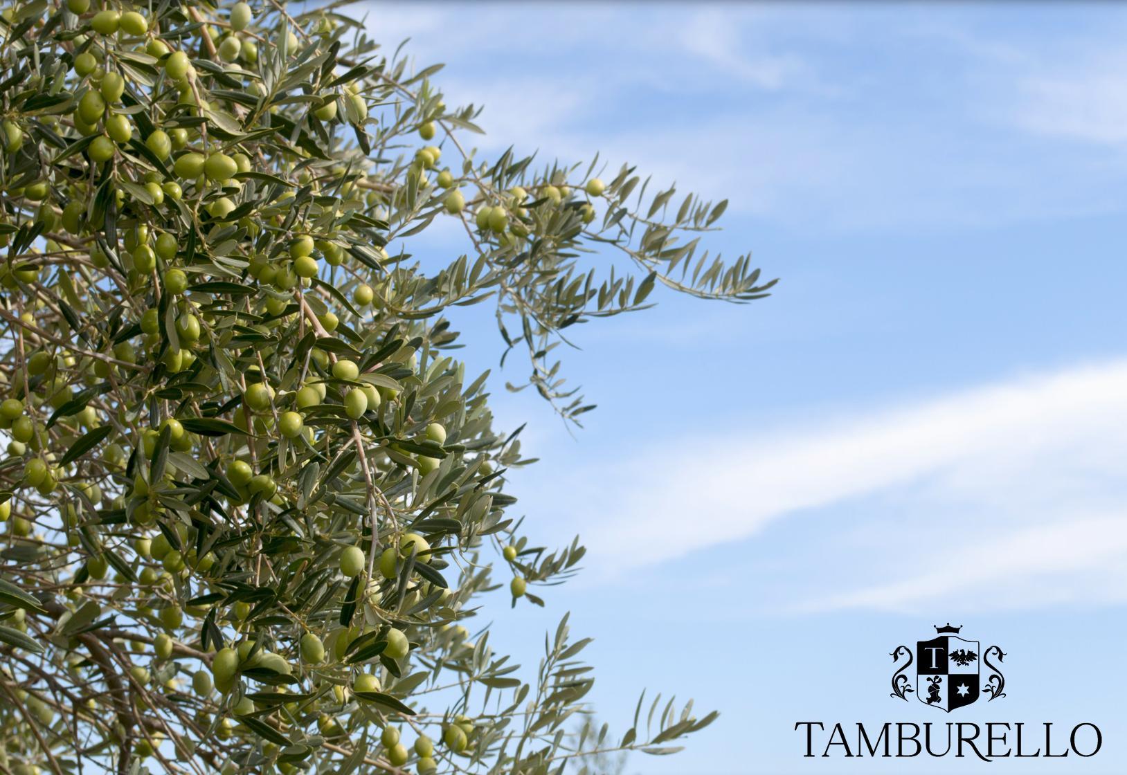 tamburello1