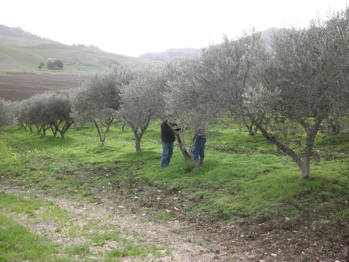 Farm-Sicily-4