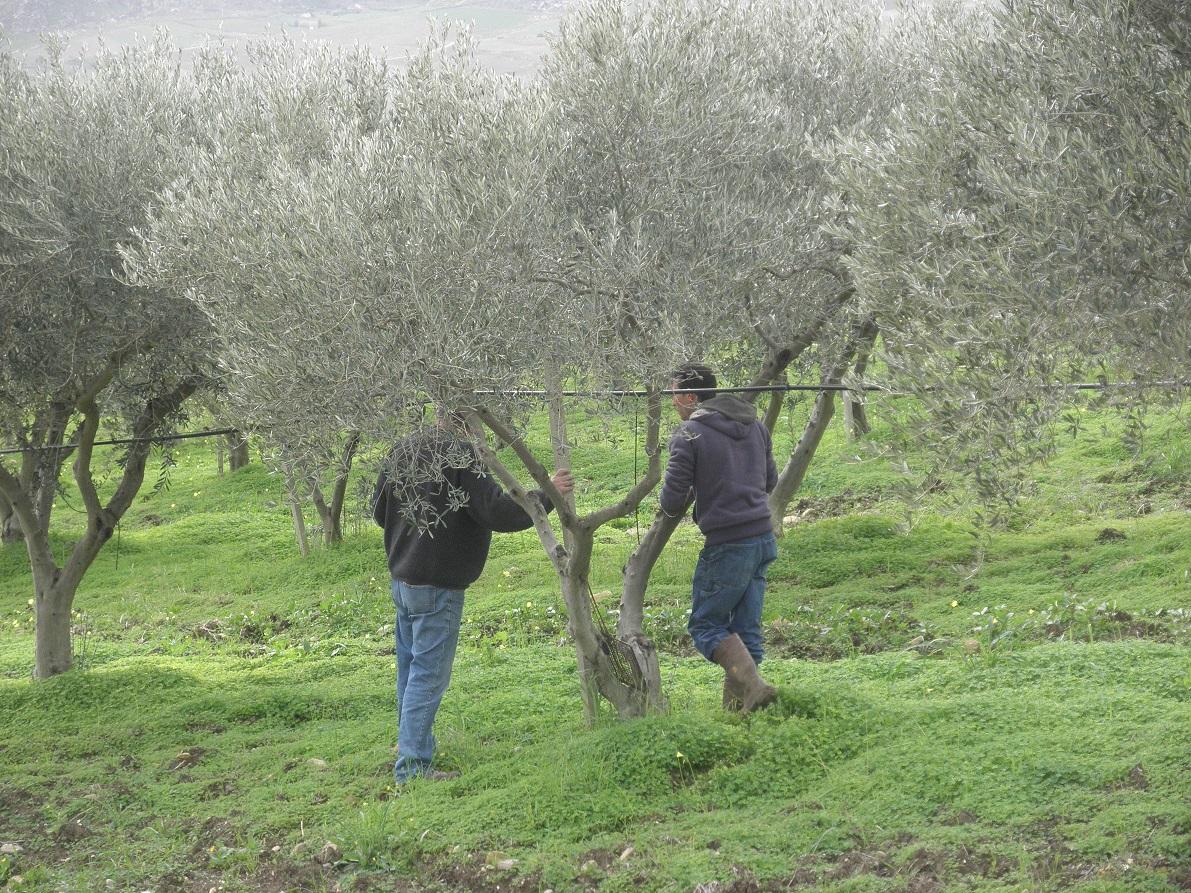 Farm-Sicily-5