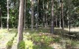Krauscha Agroforestry-v2
