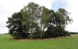 agroforestry Gut Krauscha