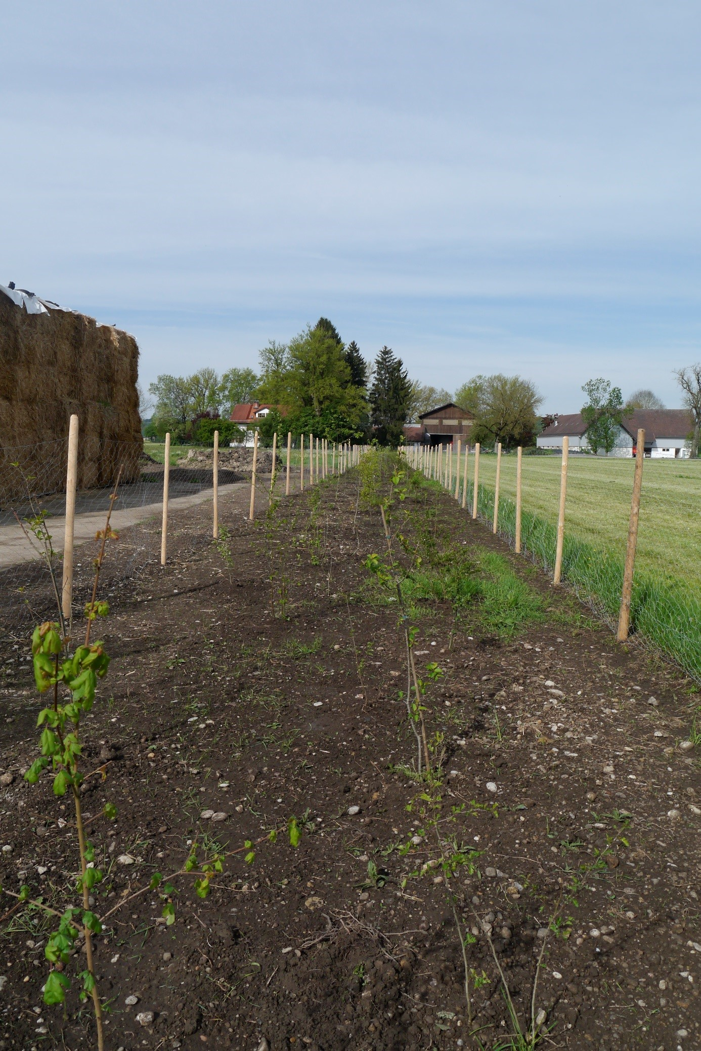© Biolandhof Kreppold: newly planted tree strip on Bioland farm Kreppold